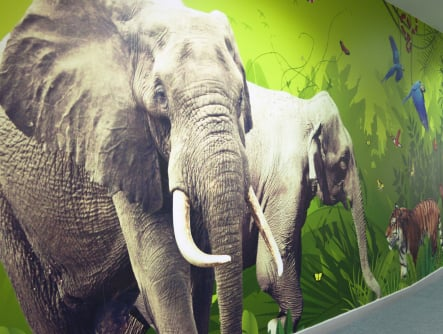Close up of bespoke elephant graphic for school corridor wall art