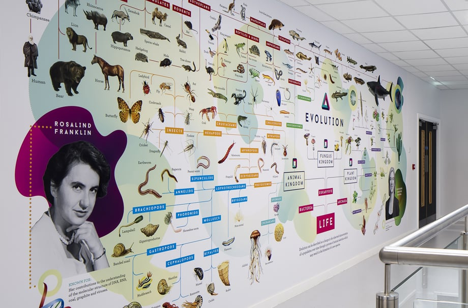 Woodford County High School For Girls evolution feature science wall art
