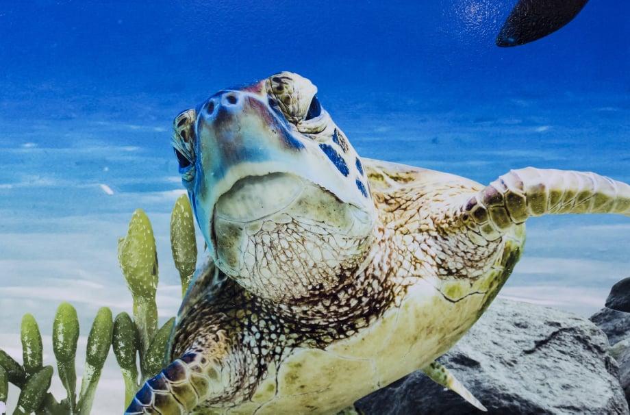 Devon Torquay Academy underwater theme large format wall art