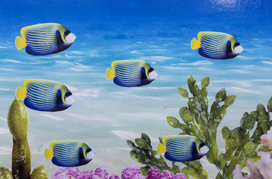 Torquay Academy bespoke underwater themed design and installation wall art