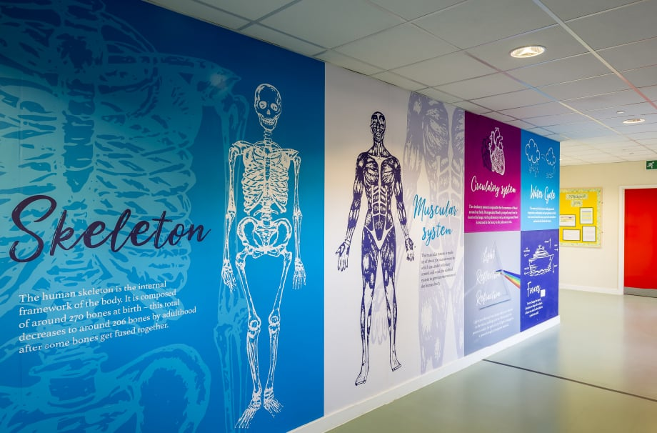 Junior School Science themed large format corridor wall art