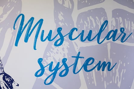 Churchfield Junior School muscular system science corridor wall art