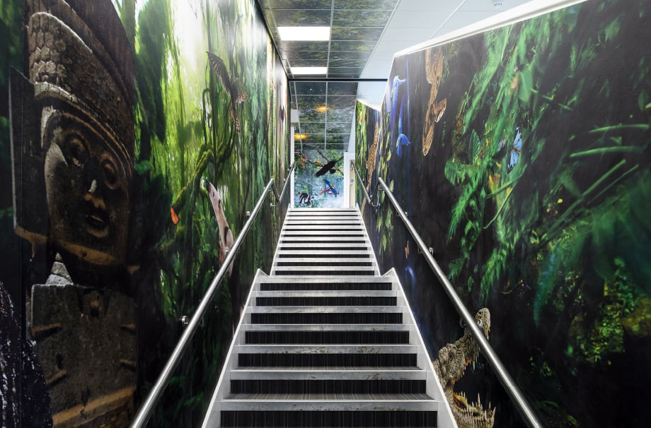 Primary School Rainforest themed stairwell installation immersive wall art