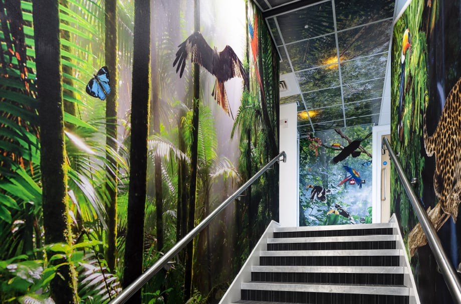 Coventry School rainforest themed stairway immersive wall art