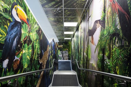 Frederick Bird Primary school rainforest stairway wall art