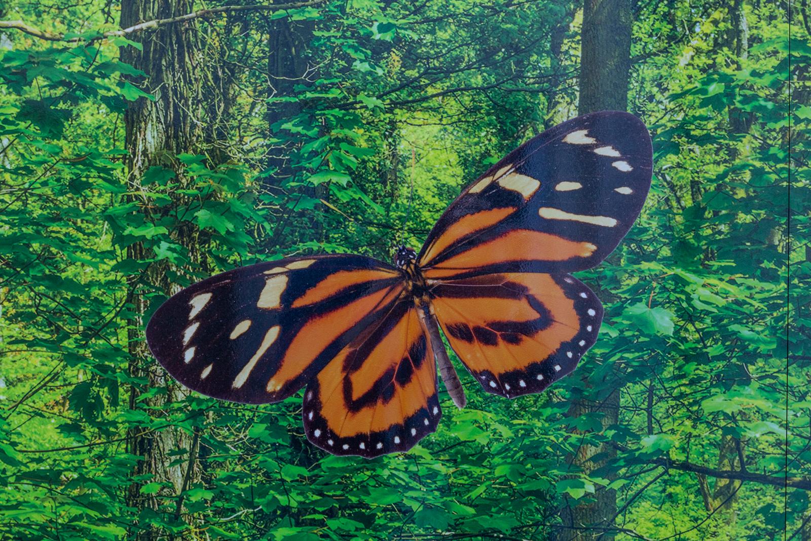 Butterfly bespoke outdoor nursery wall art